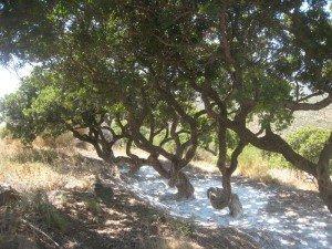 Chios ( 1): le sud dans Souvenirs 2012 IMG_36481-300x225